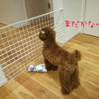 ご無沙汰です~忠犬福さん。