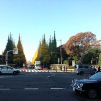 外苑の銀杏並木が見事でした