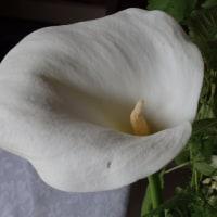 艶っぽい花 カラー