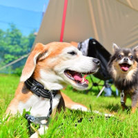 森のまきばオートキャンプ場でキャンプ(その2)♪