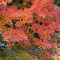 「三条大穴」の紅葉