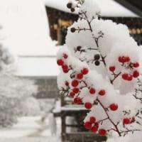 今冬最強の寒波
