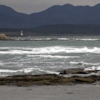 2/25探鳥記録写真(狩尾岬の鳥たち:ミサゴ、ウミアイサ他)