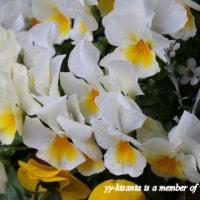 お花たちの歌声が聴こえた