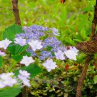 紫陽花の園