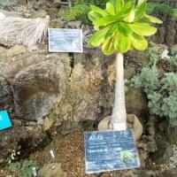 鶴見緑地ハワイアン植物展