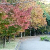 山田池公園に行って来ました。