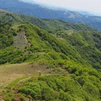 大川嶺と笠取山のツルギミツバツツジ