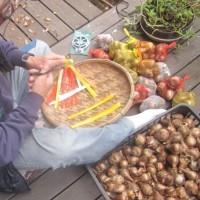 ハロウィーン用の菓子の袋詰めをする。