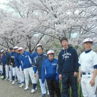 やっぱり春は桜ですね