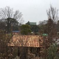 雪☆   No.1659