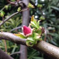 3月23日(木)のつぶやき