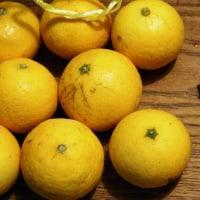 神奈川県では「ゴールデンオレンジ」と呼ばれる。