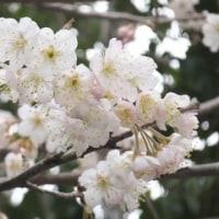 春春^-^