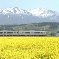 鳥海山と菜の花+電車