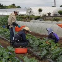 農業実践教室第22期:7回目~ズッキーニ追肥