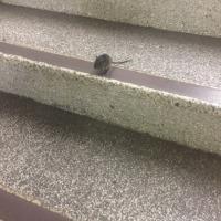 駅の階段にこんな迷子