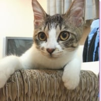 新たなる猫生活、10月号。