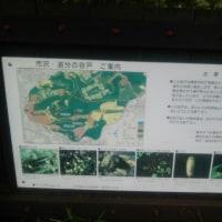 GW最終日ラン 「爆薬」公園トレイルラン