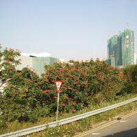 香港・マカオの旅 5