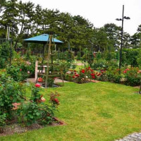 堺市・浜寺公園のバラ園へ・・・4