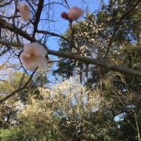 春・花・鳥・水