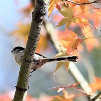 名残の紅葉に鳥たちが・・・