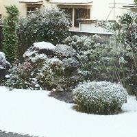 関西も雪の1日になりそうです。(TT)