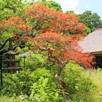 北鎌倉 浄智寺 初夏の庭園と花