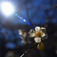 鎌倉日記24・・・宝戒寺再訪