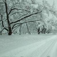 1777日目  大雪の霞城公園