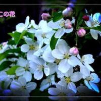 お久しぶりです〜田舎のお花観てねぇ〜
