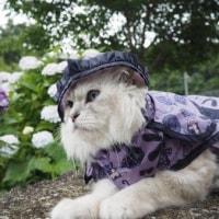 稲積の紫陽花