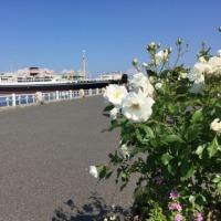 横浜大桟橋🚢