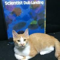 SCIENTIST / DUB LANDIN