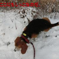 今シーズン最初の積雪