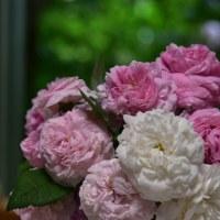 今冬は、「今を楽しむ庭」へとバラの誘引剪定