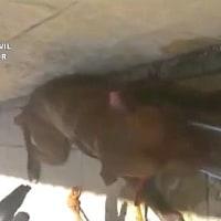 炎天下の中、車内に取り残された犬救出