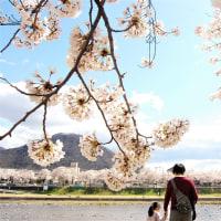 桜。ふたり。