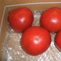 遅かったトマト