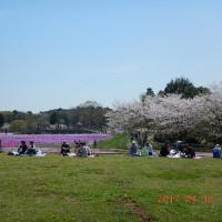芝桜を見に行ってきました。平成29年4月16日 千葉市富田町