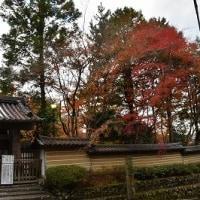 嵯峨野・嵐山 散策
