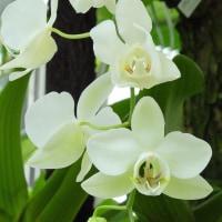 咲くやこの花館 (7)