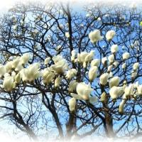 どこまでも真っ白な花