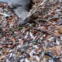 正月09日の狩猟