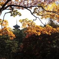 #4891 秋の三渓園①