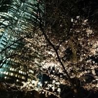 〈おでかけ〉今年のお花見は六本木
