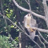 5月21日の鳥撮り散歩・・・