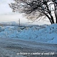 除雪・排雪作業日
