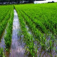 慣行栽培と有機栽培、自然栽培とは?(夫の角度)  というより還暦男子とは?でしょう(妻の角度)